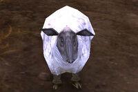 Image of Farm Sheep