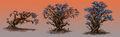 Arak Tree concept.jpg