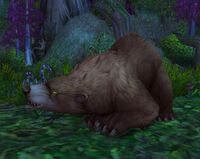 Image of Elder Ashenvale Bear