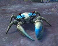 Image of Sandclaw Crab
