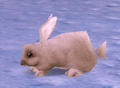 Arctic Hare.png