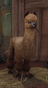 Image of Alpaca