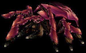 Un escarabajo silítido