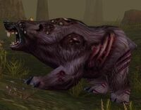 Image of Diseased Grizzly