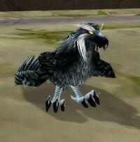 Image of Druid of the Talon