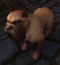 Image of Stormglen Mastiff