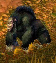 Image of Jungle Thunderer