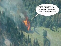 Tree-fire.jpg
