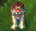 Windward Tiger.jpg