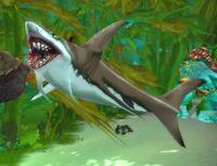 Image of Frenzied Reef Shark