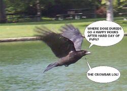 Storm-crow.jpg