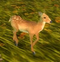 Image of Fawn