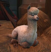 Image of Domestic Alpaca