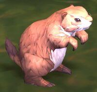 Image of Vale Marmot