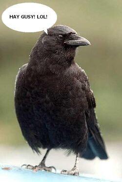Alamo-Crow.jpg