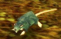 Image of Tainted Rat