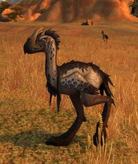 Image of Towering Plainstrider