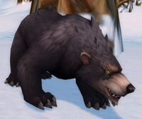 Image of Black Bear