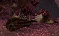 Image of Hive'Zara Tail Lasher