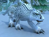 Image of Young Snow Leopard