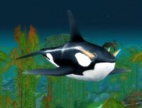 Image of Frenzied Orca