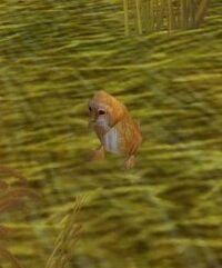 Image of Prairie Dog