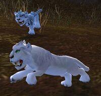 Image of Summit Prowler Cub