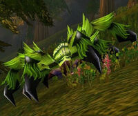 Image of Giant Moss Creeper
