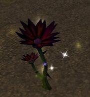 Black Lotus.jpg