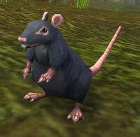 Imagen de Rata negra