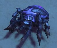 Image of Dune Bug