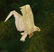 White Tickbird Hatchling