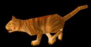 OrangeTabby