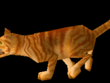 Cat Carrier (Orange Tabby)