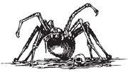 SpiderW1.JPG