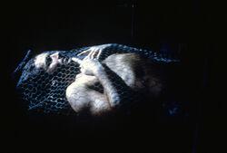 Tunguska Mulder.jpg