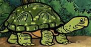 TurtleSHE.png