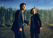 Champ de maïs Texas Mulder Scully Combattre le Futur