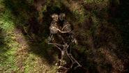 Squelettes enlacés Spores