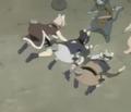 Meow (1)