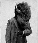 Buffalo face cropped.jpg