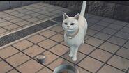 Secrets of Cats 16