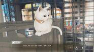 Secrets of Cats 14