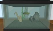 Die Schildkröte im Musikraum