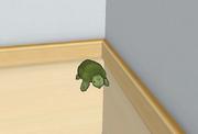 Żółw w Klubie Muzycznym.png