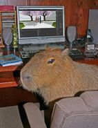 CapybaraDev