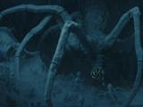 Beyaz Knobby buz örümceği