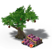 FigTreeProduce.png