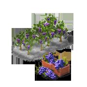 GrapesProduce.png