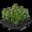 Plant corn 3 crop.png